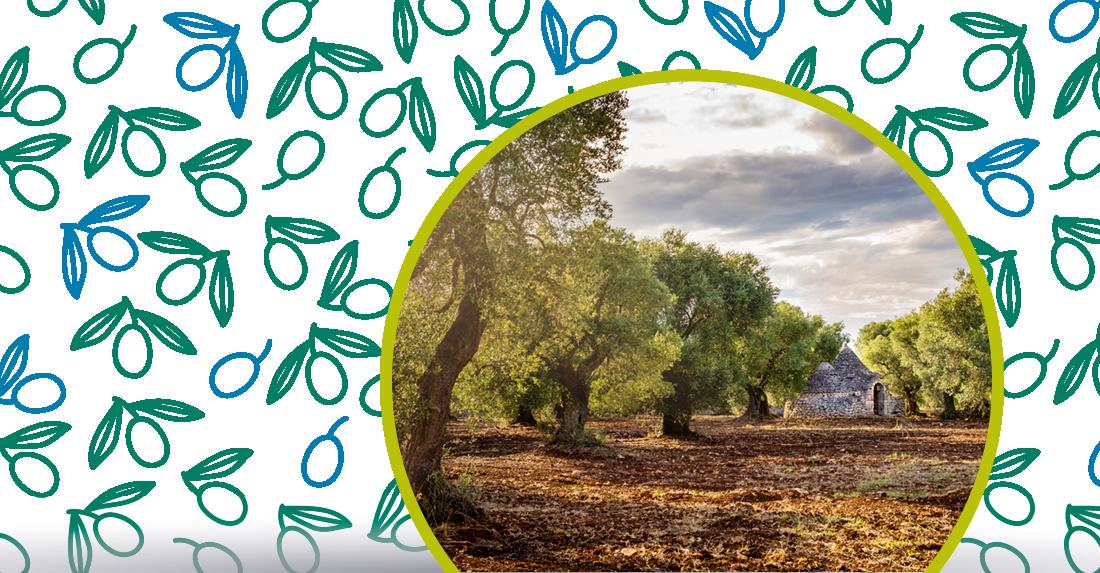 le cultivar di olivo in Puglia