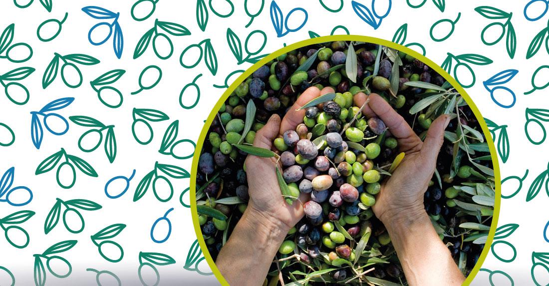 proprietà curative dell'olio extravergine di oliva